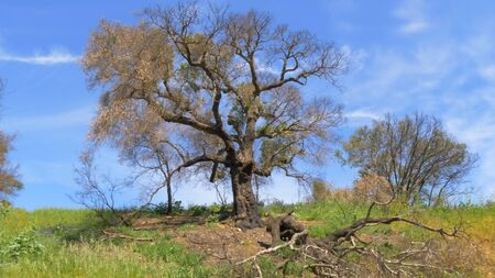 Verbrannte Bäume nach dem Großbrand in Malibu