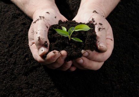 plant life: Farmer hand holding a fresh young plant. Symbol of new life Stock Photo