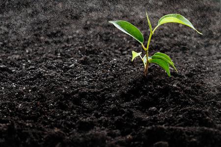 iluminado a contraluz: Pequeña planta verde bajo una lluvia de la mañana