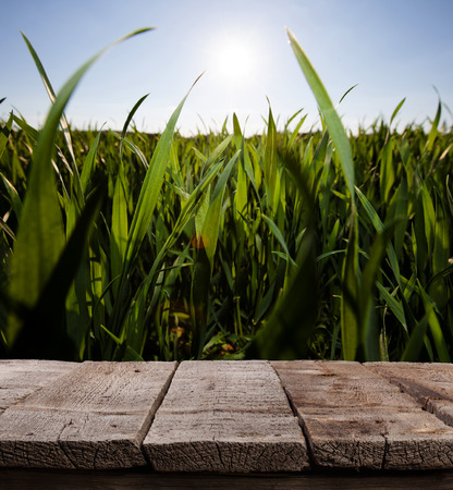 fresh grass against blue sky with clouds and wooden floor Stock Photo