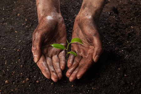 gotas de agua: manos que sostienen y la protección de una planta joven verde en la lluvia Foto de archivo