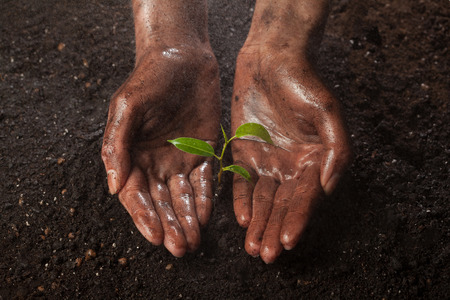 seedling: hands holding and protecting a young green plant in the rain