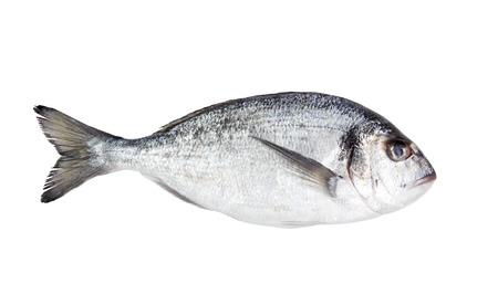 daurade: Fresh Dorado fish on a white background isolated