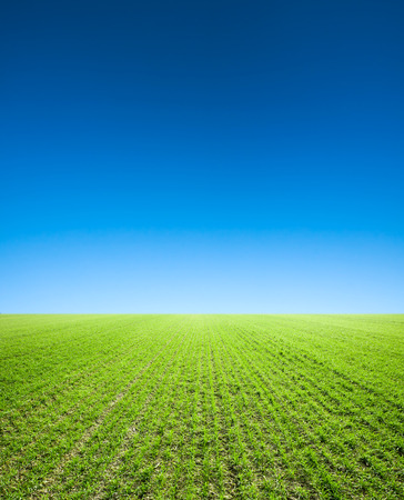 sky and grass: Field of grass,blue sky and sun. Stock Photo