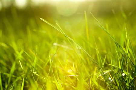Grass Foto de archivo