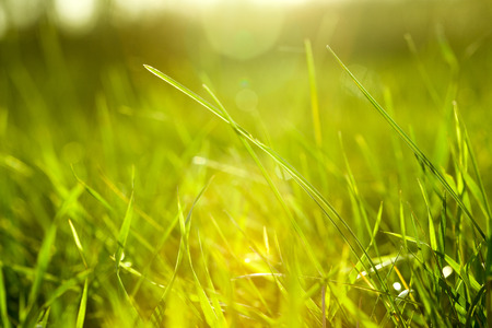 green field: Grass Stock Photo