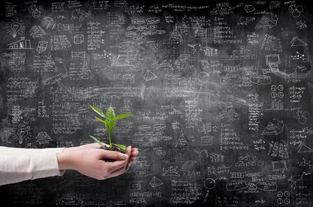 gestion empresarial: concepto de idea de negocio en la pared con las manos que sostienen la pequeña planta verde
