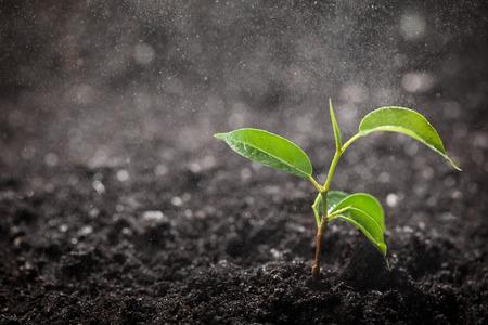 refrescar: planta en un día lluvioso