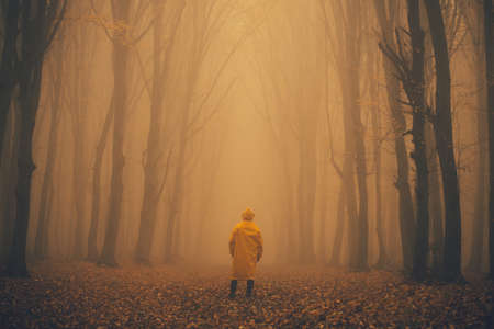 Man got lost in a spooky foggy forest among tall trees