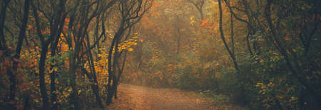 Autumn forest on a misty day in the morning 版權商用圖片