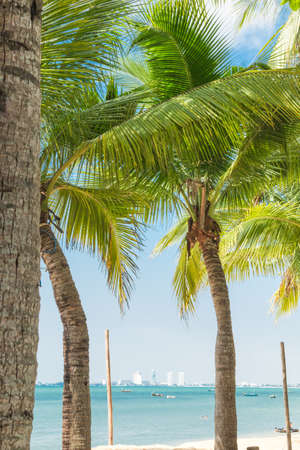 seaview: Coconut tree on beach and seaview background.