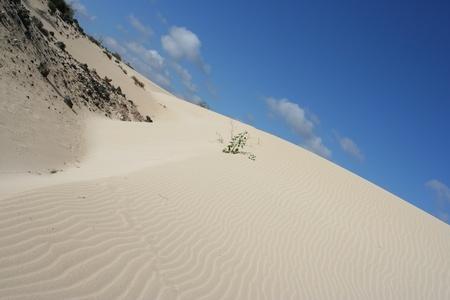 View of fuerteventura Dunes (Canarias, Fuerteventura, Spain)  Stock Photo
