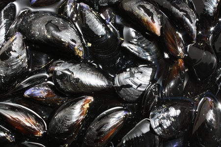 Fresh Mussels ready to cook photo