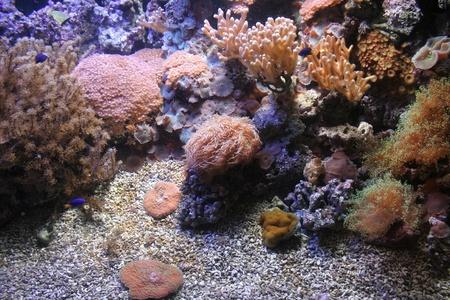 Imagen de la vida marina Mediterrainian Italia Genova Foto de archivo - 12922036