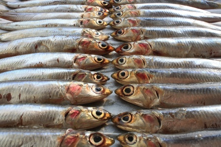 Fresh Italian Anchovies on Plate ready to be Cooked