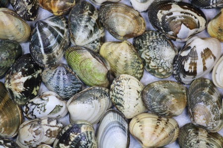 Picture of Fresh Italian Clams photo