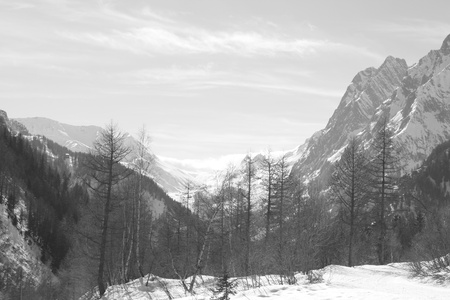 Black and white photo of Monte Bianco mountains in Winter   Courmayer Aosta Valley   photo