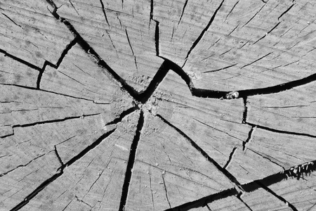 Closeup of a Cross section of tree trunk photo