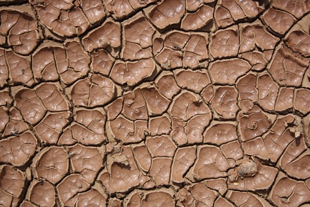 cranny: Cracked and dried mud texture