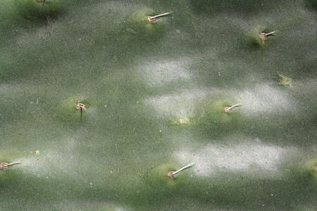 Picture of Green cactus surface as a background photo
