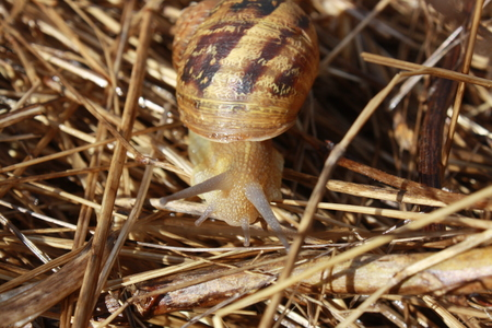 shinning leaves: Picture of snail with shell Stock Photo