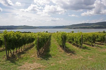 lazio: Vineyards near Tiber River, Latium, Italy Stock Photo