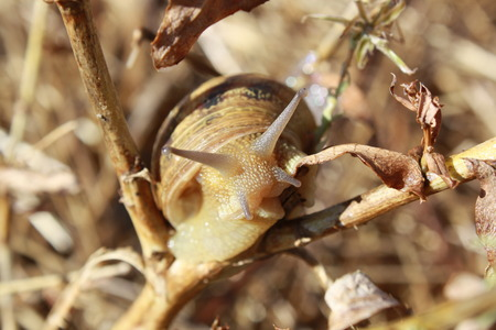 Picture of snail with shell Stock Photo