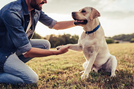 Cropped image of handsome young man with labrador outdoors. Man on a green grass with dog. ?ynologist