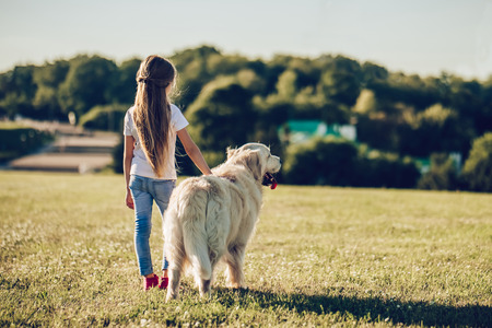 Back view of little cute girl is having fun with golden retriever on a green grass. Charming cheerful girl is standing with dog labrador.