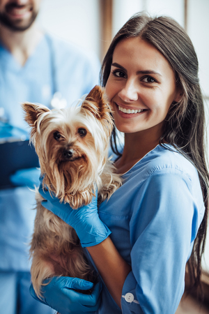 Handsome doctor veterinarian and his attractive assistant at vet clinic are examining little dog Yorkshire Terrier, smiling and looking at camera.