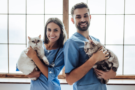 Hübscher Doktortierarzt und sein attraktiver Assistent an der Tierarztklinik halten nette Katzen auf Händen, lächeln und betrachten Kamera.