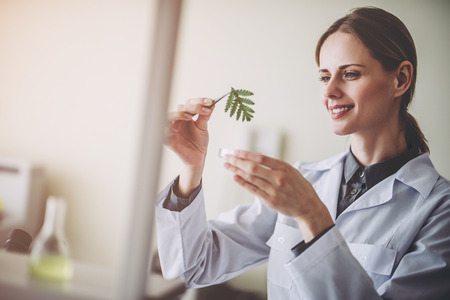 Experienced female scientist is working in laboratory. Doing investigations with leaves and Petri dish. Making biological discovering. Genetic engineering. Biochemistry, biotechnology, cloning.