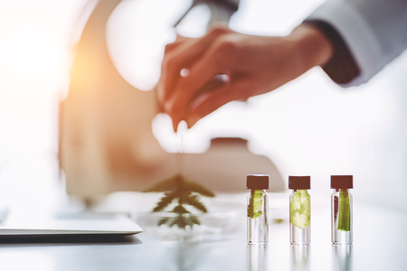 Cropped image of experienced female scientist is working in laboratory. Doing investigations with leaves and Petri dish. Making biological discovering. Genetic engineering. Biochemistry, biotechnology, cloning.