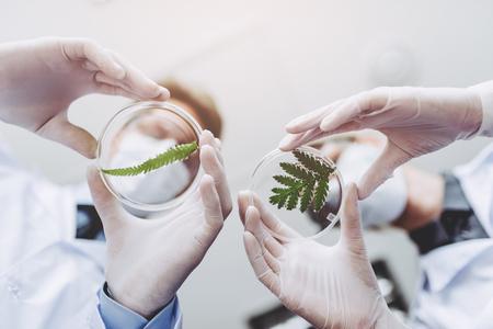 Dos científicos están trabajando en el laboratorio. La joven investigadora y su supervisor senior están haciendo investigaciones con la placa de Petri. Ingeniería genética. Haciendo descubrimientos biológicos. Bioquímica, biotecnología.