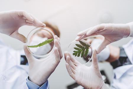 Two scientists are working in laboratory. Young female researcher and her senior supervisor are doing investigations with Petri dish. Genetic engineering. Making biological discovering. Biochemistry, biotechnology. Stock Photo