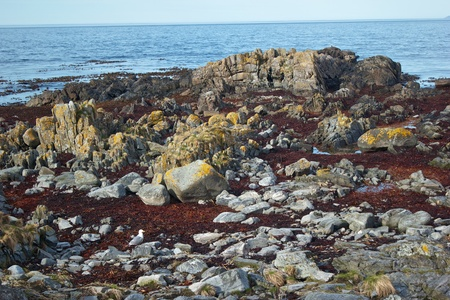 sea weed: Rocks on a sea shore covered with sea weed Stock Photo