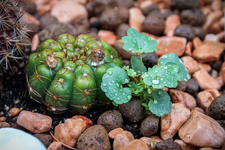 Cactus and plants wet after rain