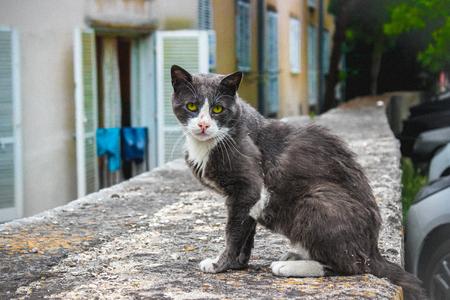 Stray Cat With Green Eyes Reklamní fotografie