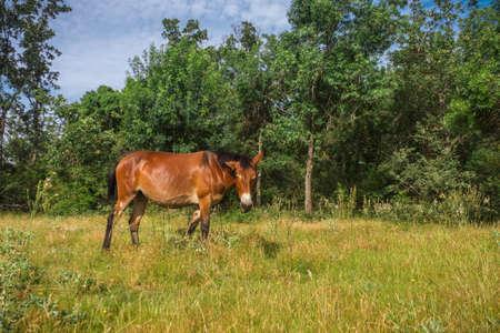 Mule dans le magnifique pâturage espagnol