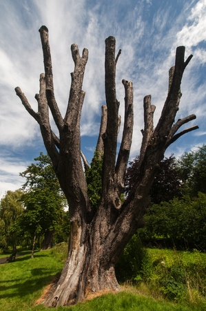 Vibrant image of a dead tree in lush surroundings
