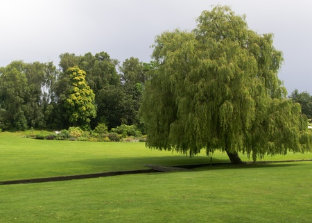 Willow Tree in Gardens