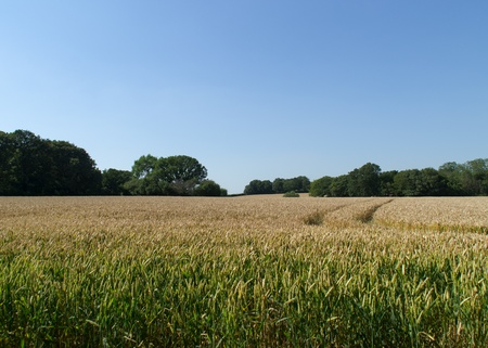 Crops growing in a field