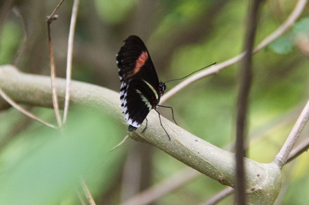 Butterfly in a natural setting