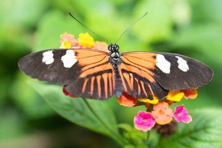 Orange and black Butterfly in a natural setting Stock Photo