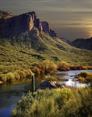 saguaro cactus: The play of light as evening approaches.The color of the surrounding environment changes to night.