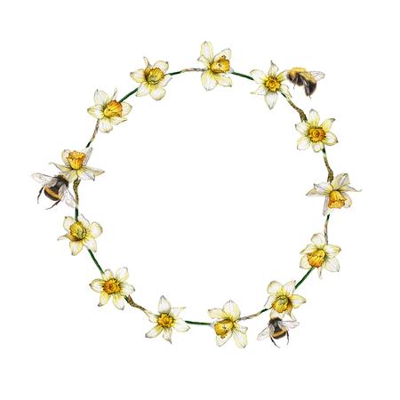 Botanical illustration of a daffodil flower wreath on white background Reklamní fotografie