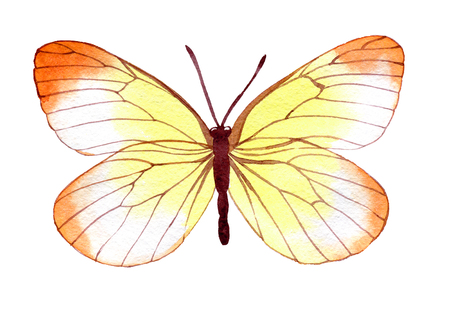 hand drawn watercolor butterfly