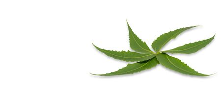 Medicinal Neem Leaves on a white background