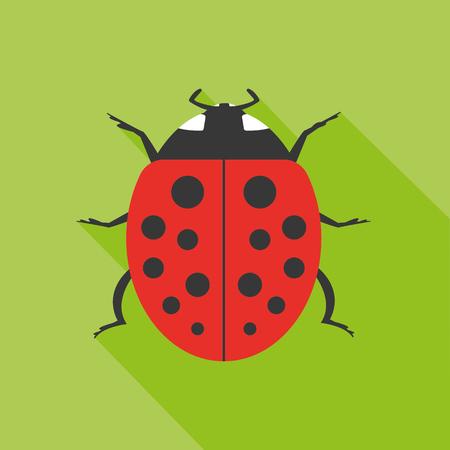 ladybird: Ladybird bug icon. Flat icon