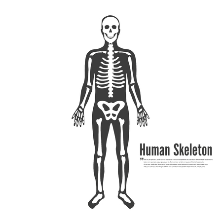 Full Human Body Skeleton Model Stock fotó - 115927768